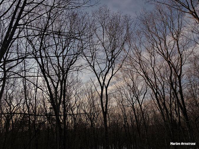 Dawn in March
