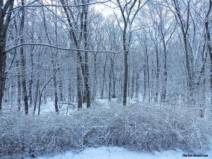 72-Trees-Last-snow-D_124