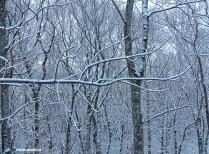 72-Trees-Last-snow-D_128