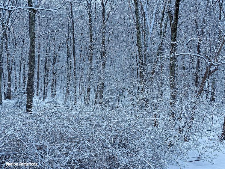 72-Woods-Last-snow-D_115
