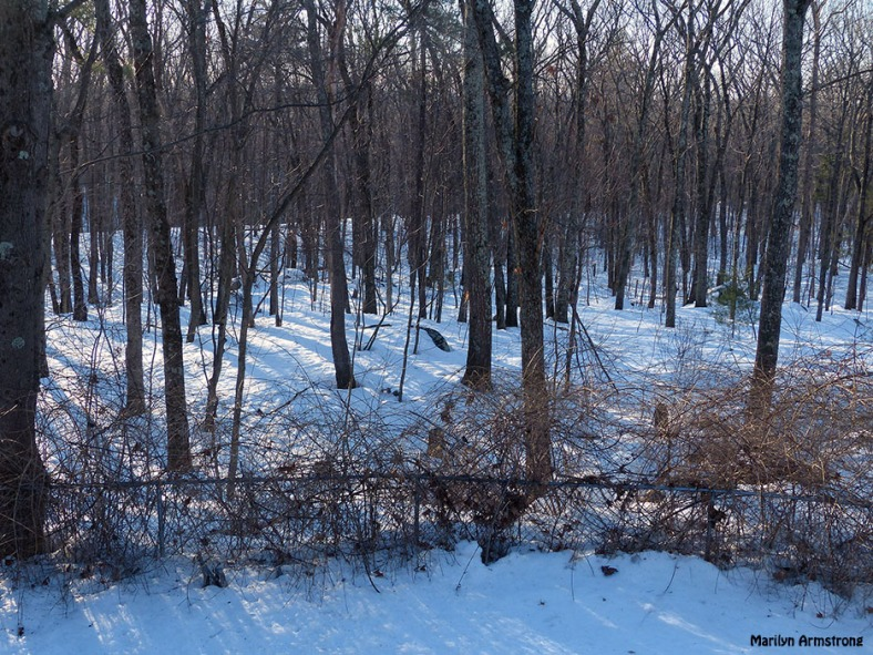 72-Woods-Morning-March-12_14