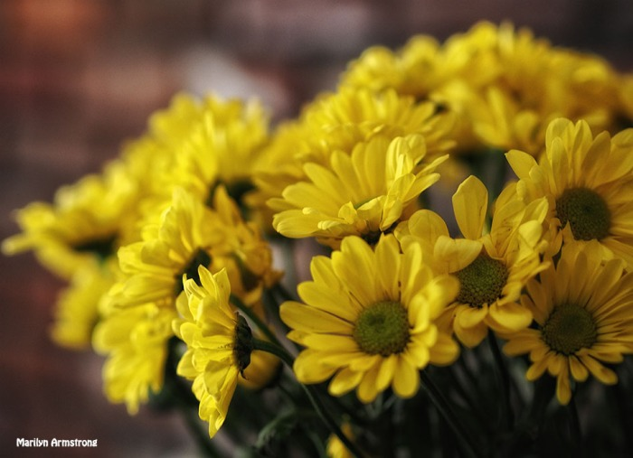 bright yellow chrysanthemum bouquet