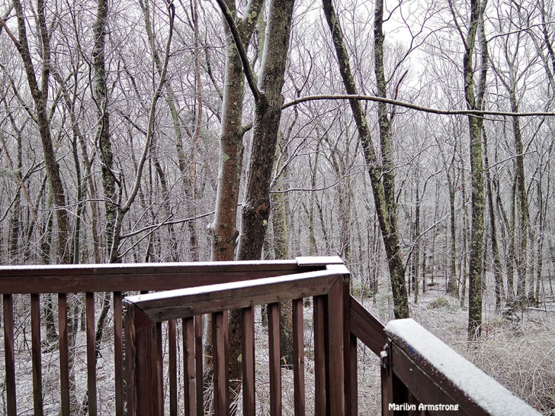 72-Back Yard sleet_17