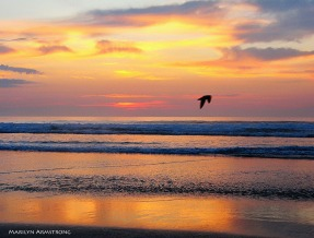 72-Bird-on-the-breeze-Ogunquit