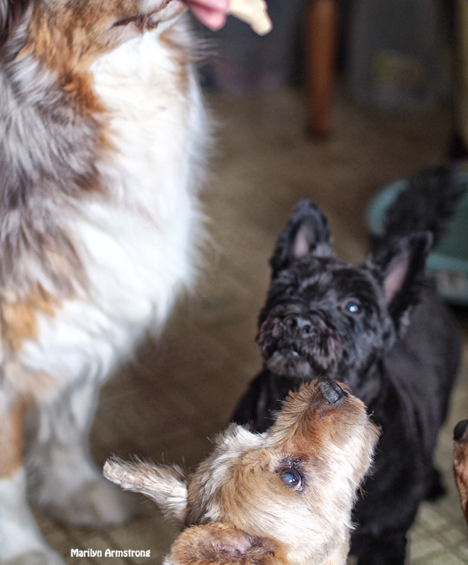 Biscuit time - All dogs