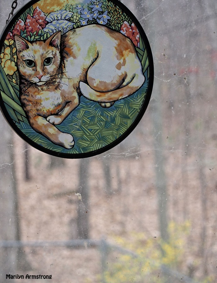 PL-6 window, cat, forsythia