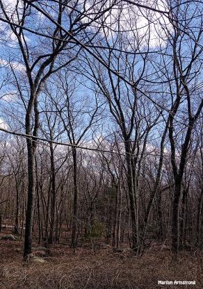 72-Woods no snow_14