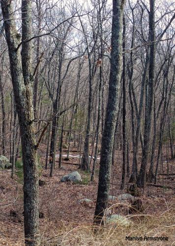 72-Woods no snow_16