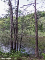 72-Amherst-River_070