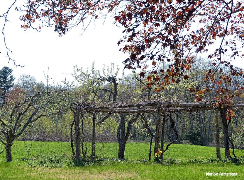 72-Arbor-orchard-farm_127