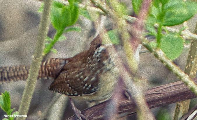 72-Bird in the bush_04