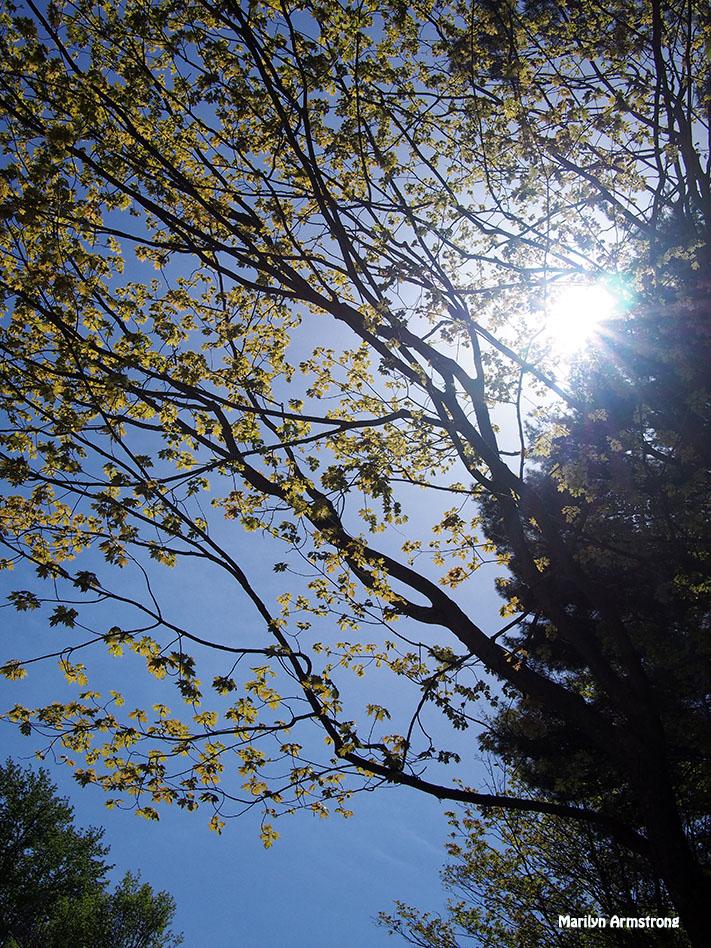 sunlight on chestnut-st