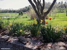 chestnut street flowers spring farm