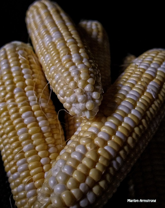 72-corn-on-the-cob_23