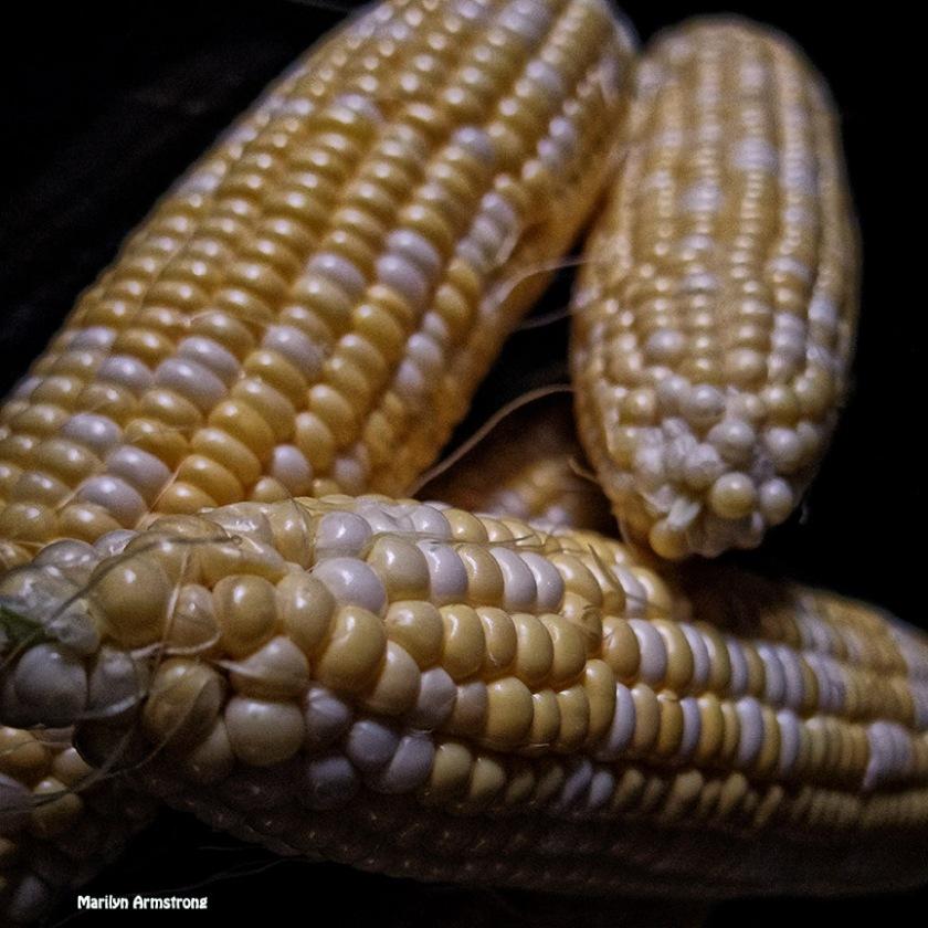 72-corn-on-the-cob_28