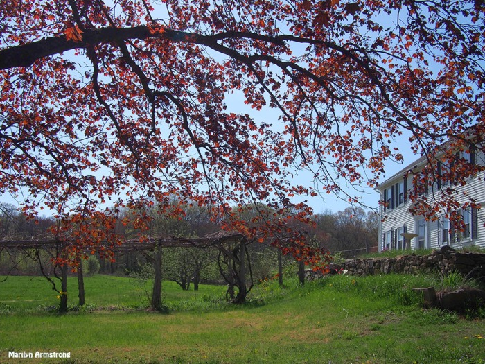 farm house chestnut street spring may