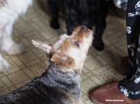 dogs in the kitchen with garry
