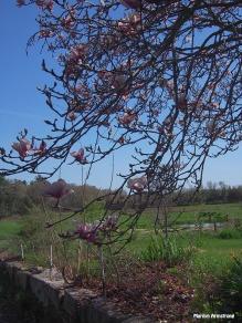 72-magnolia_056