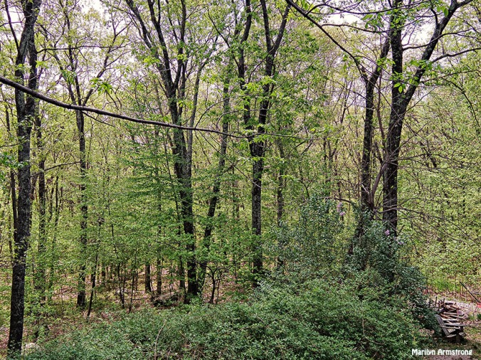 72-May-Woods-q7_25