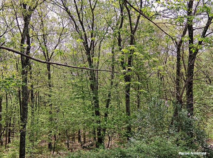 72-May-Woods-q7_28