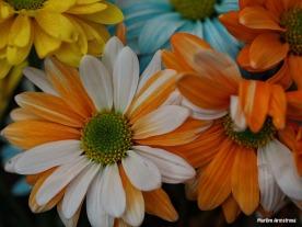 Bouquet Macro 2