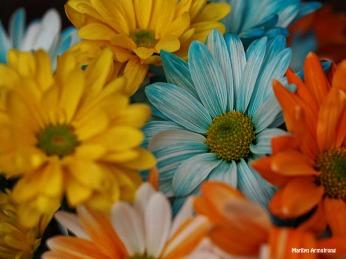 bouquet macro