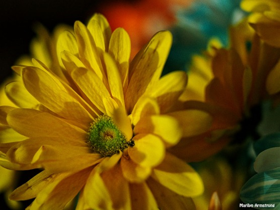 Bouquet Macro 17