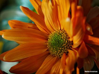 Bouquet Macro 19
