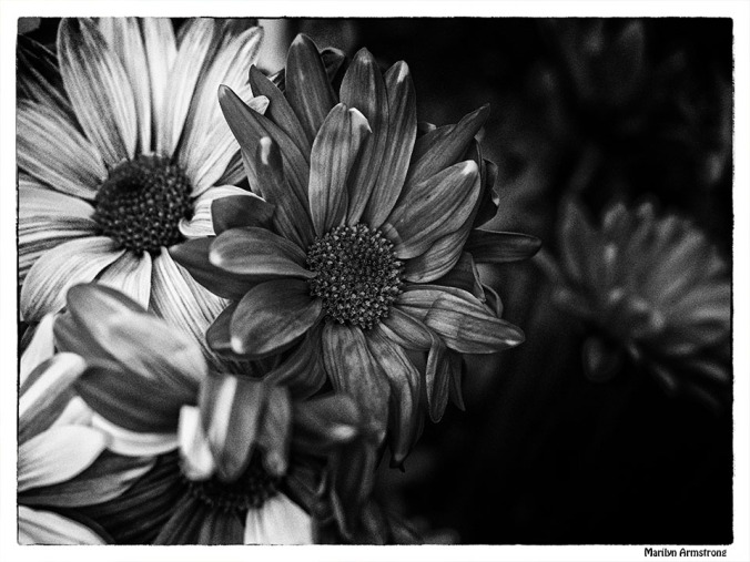 black and white noir painted daisies