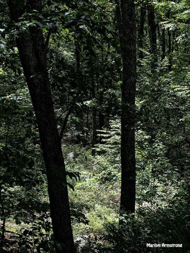 deep woods june 2015