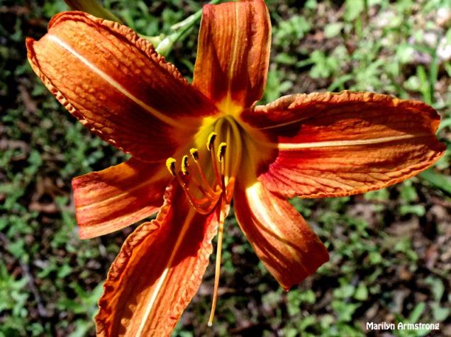 72-Lily-Garden_36