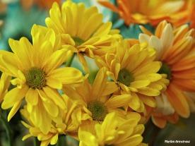 yellow daisies macro