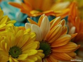 painted and yellow daisies macro