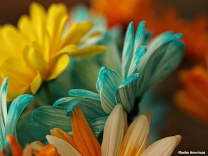 mixed bouquet macro