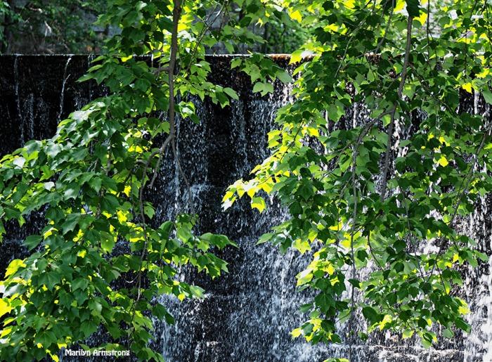 Manchaug dam falls maple trees