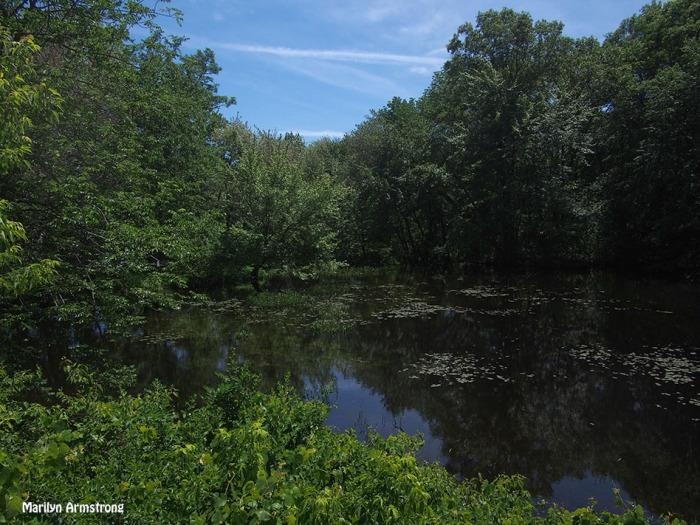 pond before manchaug dam