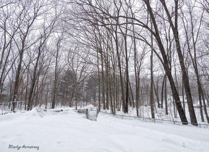 72-Snow-2-26_03