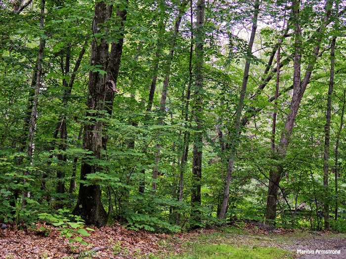 72-Woods-June29-Q7_10