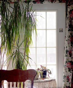 dining room plants by window light