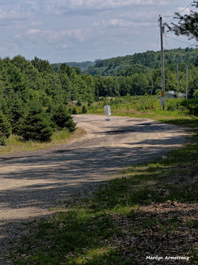 Follow the road until you see acres and acres of baby Christmas trees!