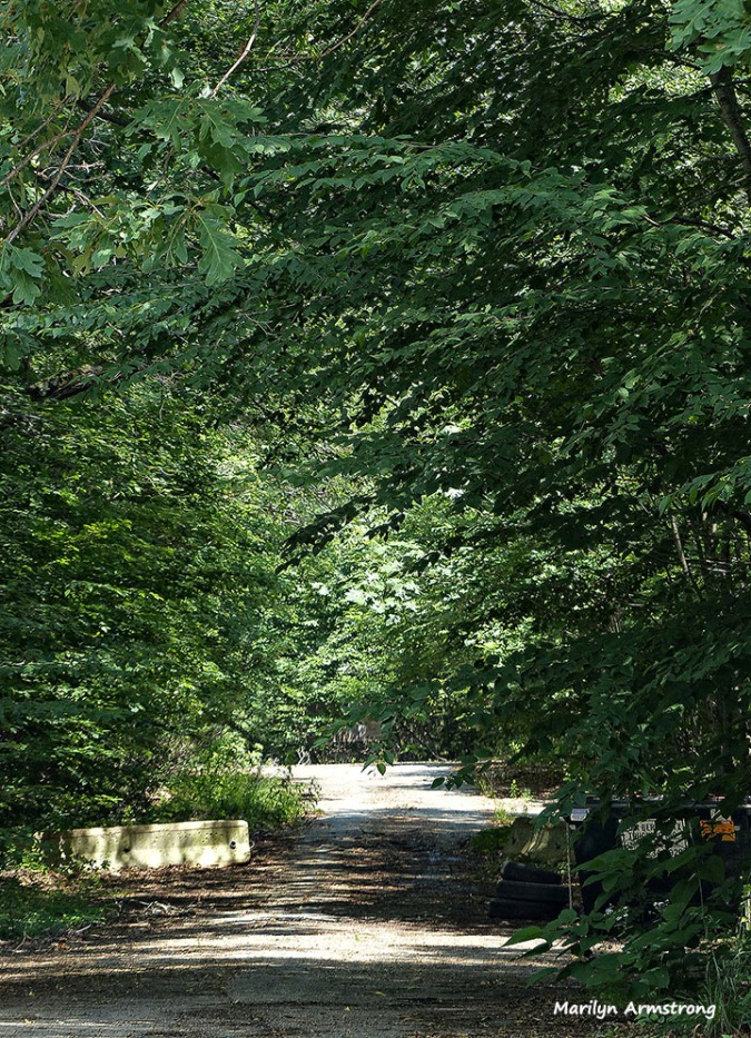 The south end of the historic horseback riding trail that crosses our road at Arrowhead Acres.