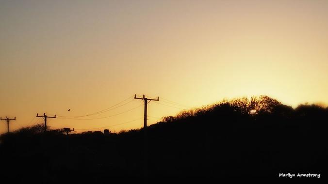 Barnstable hawk sunset