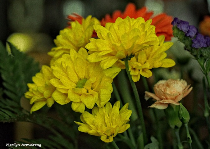 72-bouquet-macros-oil_026