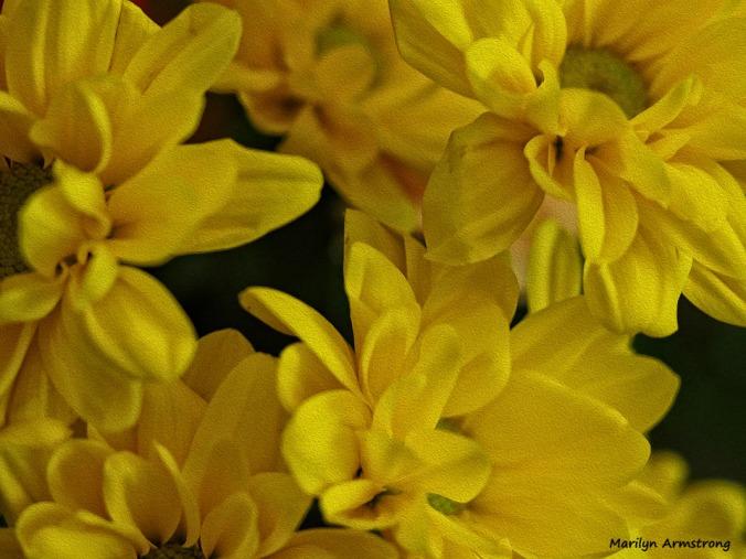 72-bouquet-macros-oil_032