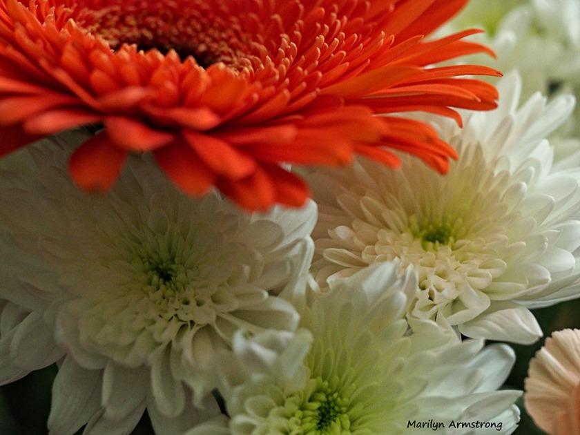 72-bouquet-macros_005
