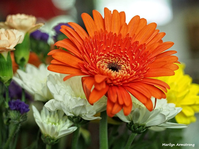 72-bouquet-macros_029