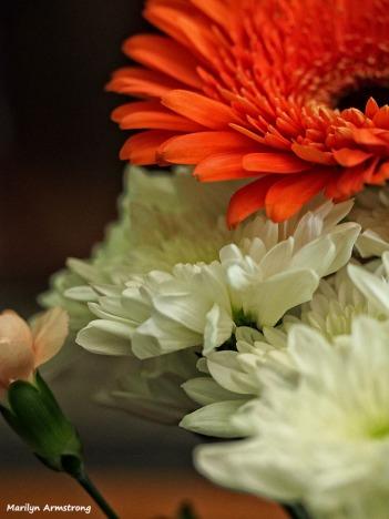 72-bouquet-macros_036