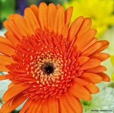 72-bouquet-macros_039