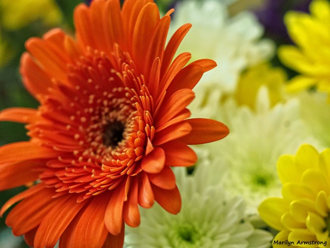 72-bouquet-macros_049
