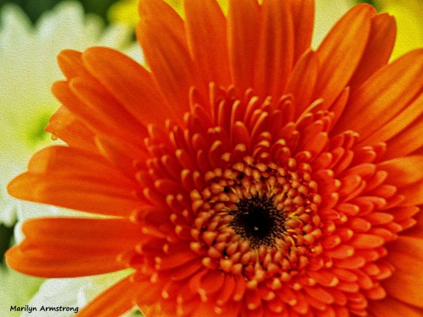 72-bouquet-macros_oil_043